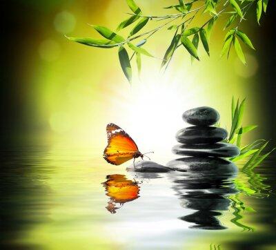 Fototapeta Exkluzivní jemný koncepce - motýl na vodě v zahradě