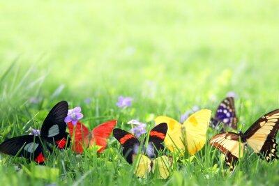 Fototapeta Exotických motýlů rámování zelené trávě pozadí