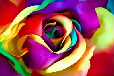 Fototapeta falešný růže květ