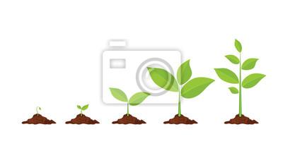 Fototapeta Fáze růstu rostlin.