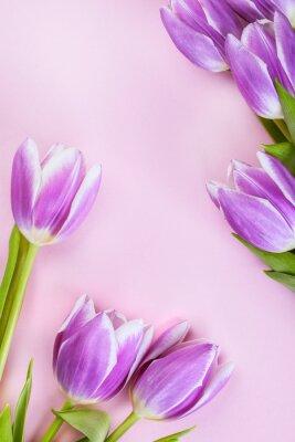 Fototapeta Fialové tulipány na růžovém pozadí