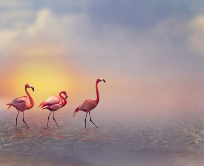 Fototapeta Flamingo Birds