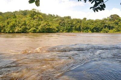 Fototapeta Fleuve d'Amazonie