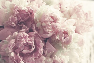 Fototapeta Fluffy růžové pivoňky květiny pozadí