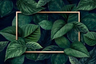 Fototapeta Forest leaf frame