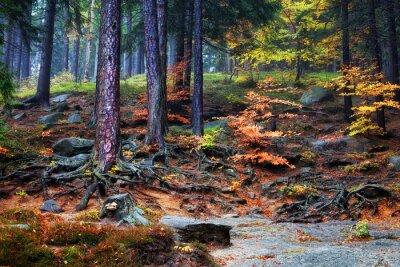 Fototapeta Forest Podrost na horském svahu