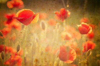 Fototapeta Fotografie Vlčí máky květiny