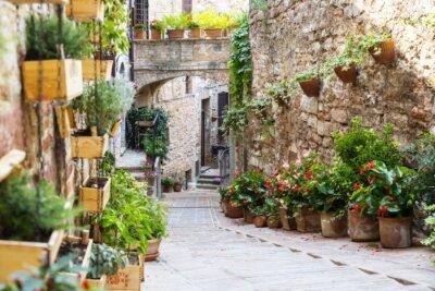Fototapeta Fotografování s Orton účinkem ulice zdobená rostlin a květin v historickém italském městě Spello (Umbria, Itálie)