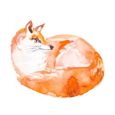 Fototapeta Fox na bílém pozadí. Akvarel. ,