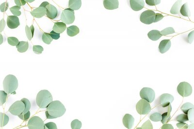 Fototapeta frame of green branches, eucalyptus leaves on a white background. flat layout, top view