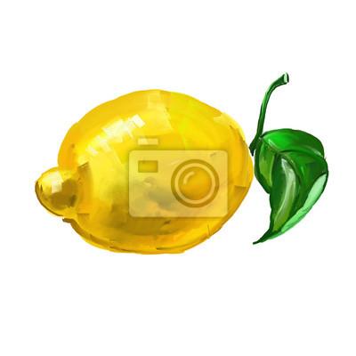 Fruit Citron Vektorove Ilustrace Kreslene Rucne Malovane Akvarel