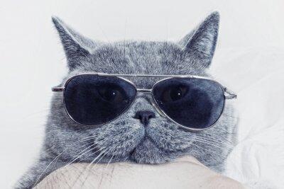Fototapeta Funny Hlaveň šedá kočka ve slunečních brýlích