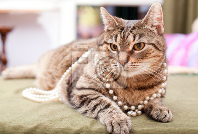 mladý zázvor kočička