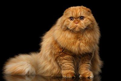 Kočička tlusté fotky