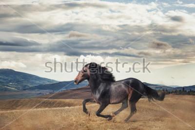 Fototapeta Galloping horse