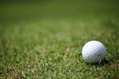 Fototapeta Golfový míček v trávě