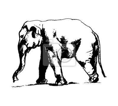 Graficky Obraz Slona Na Bilem Pozadi Volna Kresba Jednoduchy