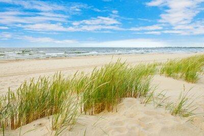 Fototapeta Grass písečná duna pohled plážové mořská, Sobieszewo Baltic Sea, Polsko