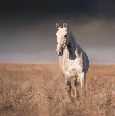 Fototapeta Gray kůň běh