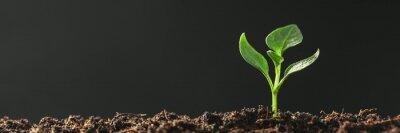 Fototapeta Green seedling growing on the ground in the rain