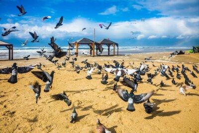 Fototapeta Hejno holubů je to hlučné odchylují