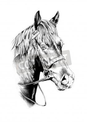 Hlava Kone Kresba Tuzkou Fototapeta Fototapety Mustang Monochrom