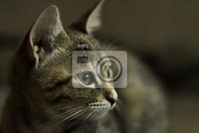 kočička fotografie zblízka