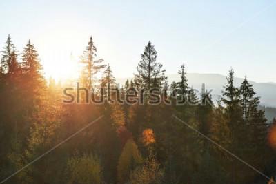 Fototapeta Horská podzimní krajina s barevným lesem. Dramatická ranní scéna, červené a žluté podzimní listí. Místo místa Karpaty, Ukrajina, Evropa.