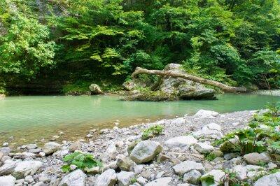 Fototapeta Horské řeky na Kavkaze poblíž Soči