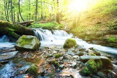 Fototapeta Horského potoka vodopád v zeleném lese