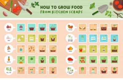 Fototapeta How to grow food from kitchen scraps