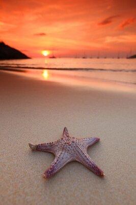 Fototapeta Hvězdice na pláži