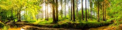 Fototapeta Idylický les s potokem při východu slunce