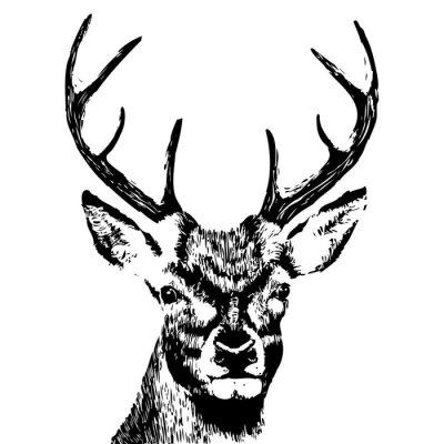 Fototapeta ilustrace hlavy jelen, grunge, silueta izolovaných na bílém