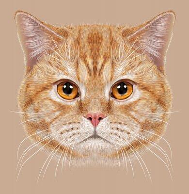 Fototapeta Ilustrace portrét britské krátké vlasy kočka. Cute oranžový domácí kočka s měděnými očima.