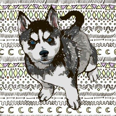 Fototapeta Ilustrace psa plemeno Husky
