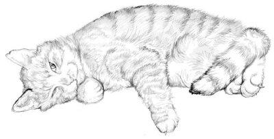 Ilustrace Spici Kocku Cerne A Bile Kresby Image Kresleni Na