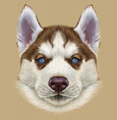 Fototapeta Ilustrační Portrait of husky štěně. Roztomilý portrét mladé mědi červené bi-barevný pes se světle modrýma očima.