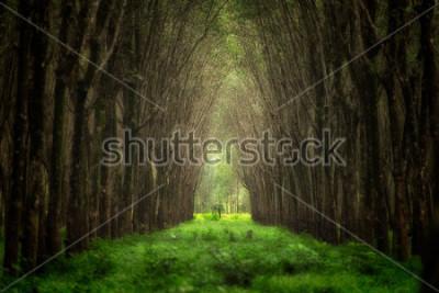Fototapeta Imaginární stromový tunel. Krásná příroda lesní fantazie.