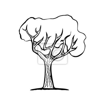 Izolovane Cerny Obrys Strom Na Bilem Pozadi Hand Drawn Fototapeta