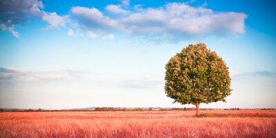 Fototapeta Izolované strom v Toskánsku wheatfield - (Toskánsko - Itálie) - tónovaný obraz s kopií vesmíru