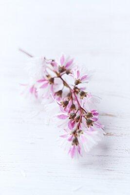 Fototapeta Jarní květy
