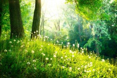 Fototapeta Jarní příroda. Krásná krajina. Zelená tráva a stromy