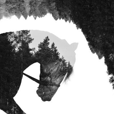 Fototapeta Jedle les uvnitř koně v umění, multiexposition