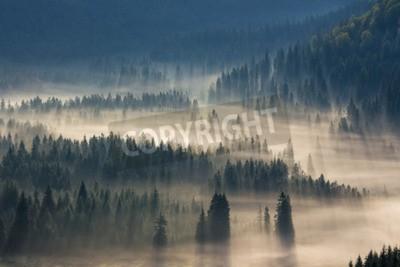 Fototapeta jedle na louce dolů vůle k jehličnatého lesa v mlze horách