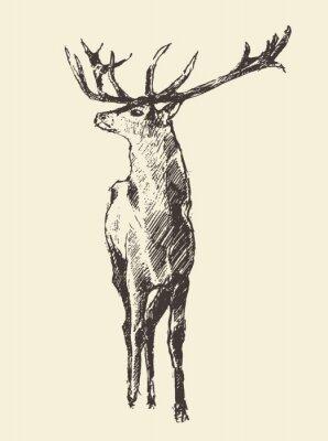Fototapeta Jelen gravírování, Vintage ilustrace, Vector