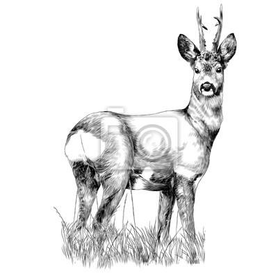 Jelen Stoji V Vektorove Grafice Monochromaticke Kresby Suche