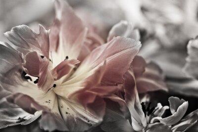 Fototapeta Jemné umění v blízkosti-up tulipánů, rozmazané a ostré