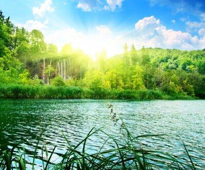 Fototapeta jezero v hlubokém lese