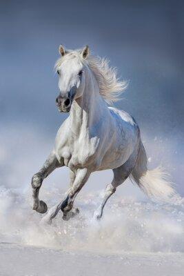 Fototapeta Jízda na sněhu